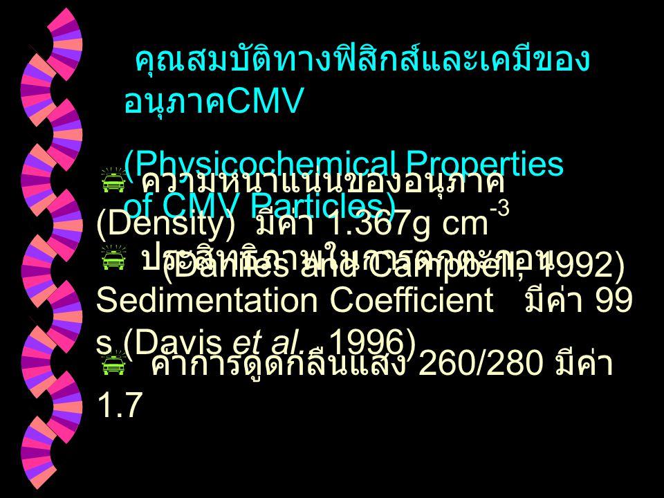 คุณสมบัติทางฟิสิกส์และเคมีของ อนุภาค CMV (Physicochemical Properties of CMV Particles)  ความหนาแน่นของอนุภาค (Density) มีค่า 1.367g cm -3 (Daniles and Campbell, 1992)  ประสิทธิภาพในการตกตะกอน Sedimentation Coefficient มีค่า 99 s (Davis et al., 1996)  ค่าการดูดกลืนแสง 260/280 มีค่า 1.7