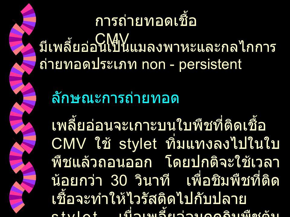 Inclusion CMV inclusion ใน epidermis cell ของ Capsicum annum  http : // www.elsevier.com/virus