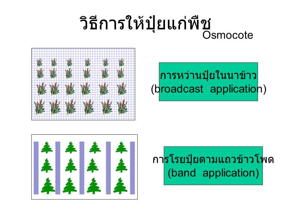 วิธีการให้ปุ๋ยแก่พืช การหว่านปุ๋ยในนาข้าว (broadcast application) การโรยปุ๋ยตามแถวข้าวโพด (band application) Osmocote