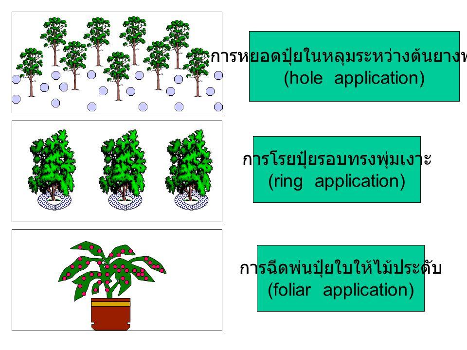 การโรยปุ๋ยรอบทรงพุ่มเงาะ (ring application) การหยอดปุ๋ยในหลุมระหว่างต้นยางพารา (hole application) การฉีดพ่นปุ๋ยใบให้ไม้ประดับ (foliar application)
