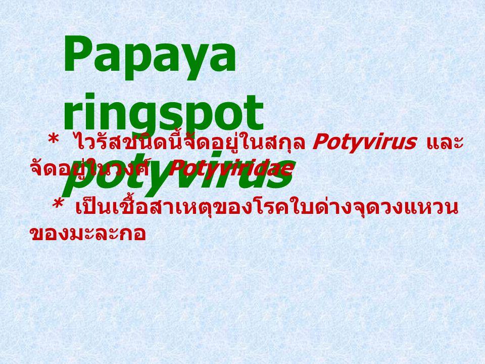 Papaya ringspot potyvirus * ไวรัสชนิดนี้จัดอยู่ในสกุล Potyvirus และ จัดอยู่ในวงศ์ Potyviridae * เป็นเชื้อสาเหตุของโรคใบด่างจุดวงแหวน ของมะละกอ