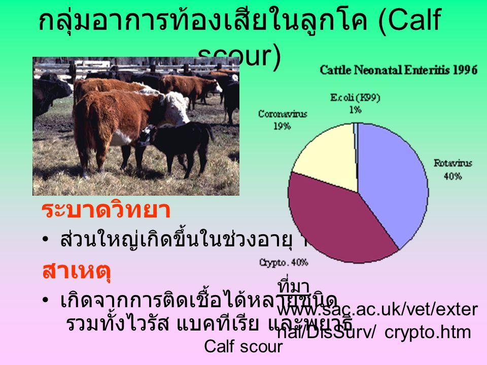 Calf scour กลุ่มอาการท้องเสียในลูกโค (Calf scour) ระบาดวิทยา ส่วนใหญ่เกิดขึ้นในช่วงอายุ 1-3 อาทิตย์ สาเหตุ เกิดจากการติดเชื้อได้หลายชนิด รวมทั้งไวรัส แบคทีเรีย และพยาธิ ที่มา www.sac.ac.uk/vet/exter nal/DisSurv/ crypto.htm