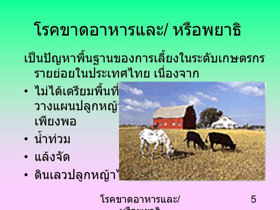 โรคขาดอาหารและ / หรือพยาธิ 5 เป็นปัญหาพื้นฐานของการเลี้ยงในระดับเกษตรกร รายย่อยในประเทศไทย เนื่องจาก ไม่ได้เตรียมพื้นที่และ วางแผนปลูกหญ้าให้ เพียงพอ น้ำท่วม แล้งจัด ดินเลวปลูกหญ้าไม่ขึ้น