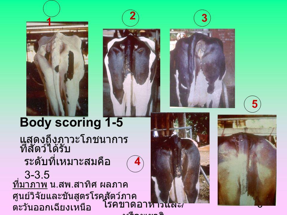 โรคขาดอาหารและ / หรือพยาธิ 6 Body scoring 1-5 แสดงถึงภาวะโภชนาการ ที่สัตว์ได้รับ 1 2 3 4 5 ระดับที่เหมาะสมคือ 3-3.5 ที่มาภาพ น.