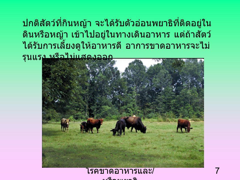 โรคขาดอาหารและ / หรือพยาธิ 7 ปกติสัตว์ที่กินหญ้า จะได้รับตัวอ่อนพยาธิที่ติดอยู่ใน ดินหรือหญ้า เข้าไปอยู่ในทางเดินอาหาร แต่ถ้าสัตว์ ได้รับการเลี้ยงดูให้อาหารดี อาการขาดอาหารจะไม่ รุนแรง หรือไม่แสดงออก