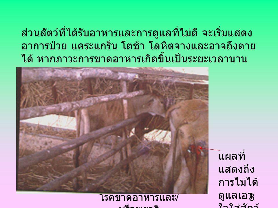 โรคขาดอาหารและ / หรือพยาธิ 7 ปกติสัตว์ที่กินหญ้า จะได้รับตัวอ่อนพยาธิที่ติดอยู่ใน ดินหรือหญ้า เข้าไปอยู่ในทางเดินอาหาร แต่ถ้าสัตว์ ได้รับการเลี้ยงดูให