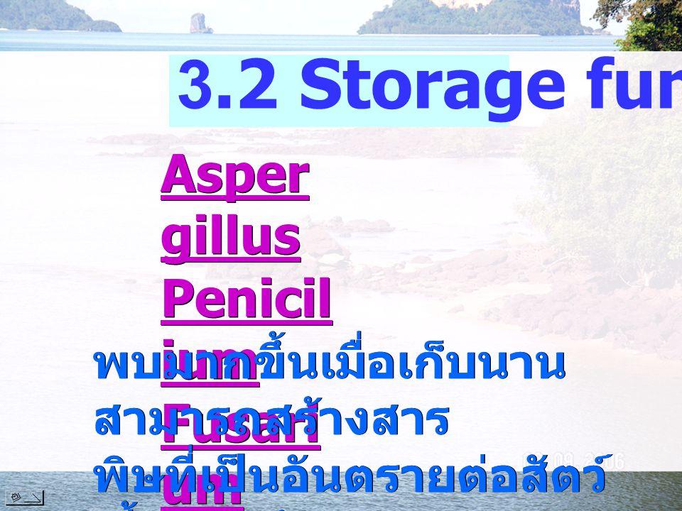 Asper gillus Penicil ium Fusari um Asper gillus Penicil ium Fusari um 3.2 Storage fungi พบมากขึ้นเมื่อเก็บนาน สามารถสร้างสาร พิษที่เป็นอันตรายต่อสัตว์