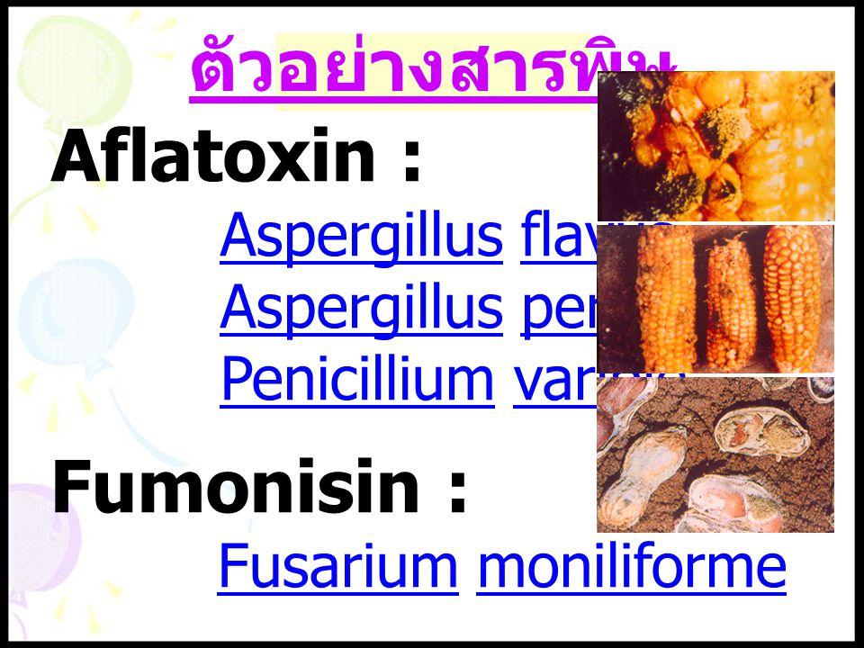 ตัวอย่างสารพิษ Aspergillus flavus Aspergillus perasiticus Penicillium varible Fusarium moniliforme Aflatoxin : Fumonisin :