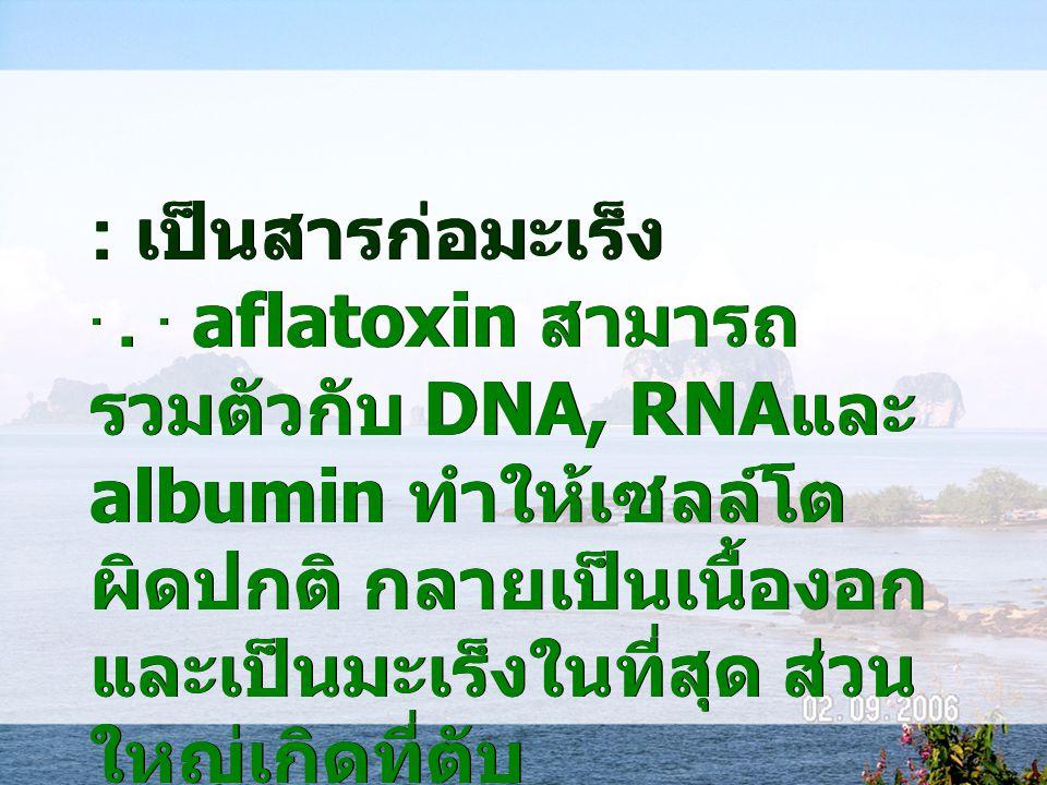 : เป็นสารก่อมะเร็ง... aflatoxin สามารถ รวมตัวกับ DNA, RNA และ albumin ทำให้เซลล์โต ผิดปกติ กลายเป็นเนื้องอก และเป็นมะเร็งในที่สุด ส่วน ใหญ่เกิดที่ตับ