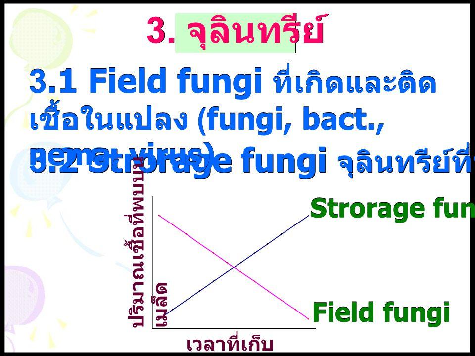 3.2 Strorage fungi จุลินทรีย์ที่พบเมื่อเก็บนานๆ 3. จุลินทรีย์ 3.1 Field fungi ที่เกิดและติด เชื้อในแปลง (fungi, bact., nema, virus) เวลาที่เก็บ ปริมาณ