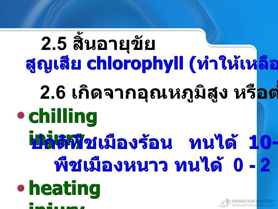 heating injury สูญเสีย chlorophyll ( ทำให้เหลือง ) 2.5 สิ้นอายุขัย 2.6 เกิดจากอุณหภูมิสูง หรือต่ำเกินไป chilling injury พืชเมืองหนาว ทนได้ 0 - 2  C ป