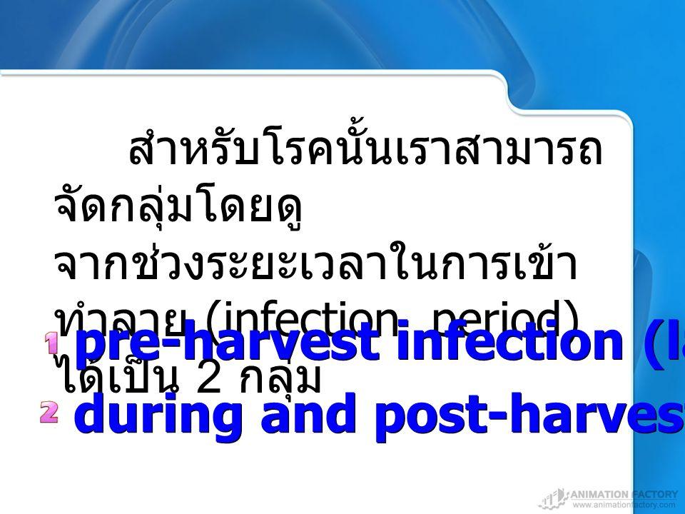 during and post-harvest infection สำหรับโรคนั้นเราสามารถ จัดกลุ่มโดยดู จากช่วงระยะเวลาในการเข้า ทำลาย (infection period) ได้เป็น 2 กลุ่ม pre-harvest i