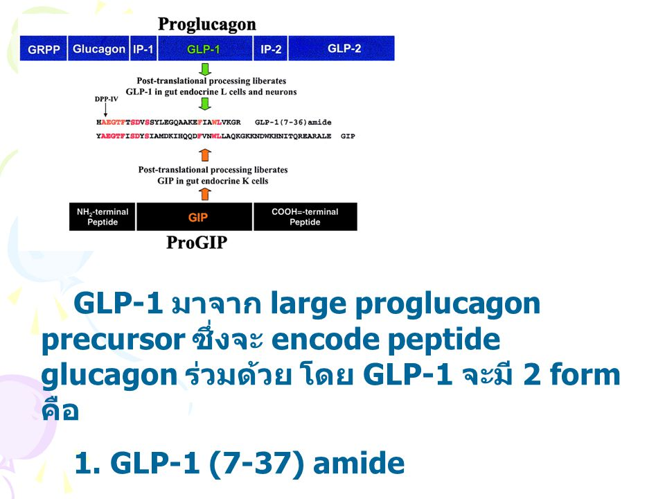 IN T2DM พบว่า Normal GIP secretion & defective GIP response Reduced GLP-1 secretion & preserved GLP-1 response Diabetes care.2003 Oct;26(10):2929-2940