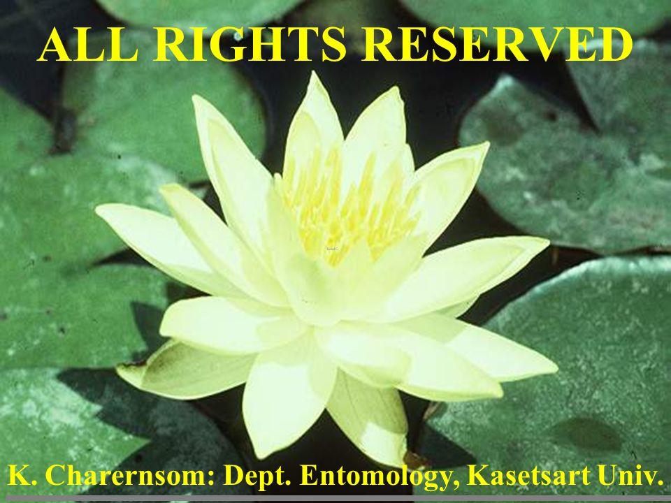 ALL RIGHTS RESERVED K. Charernsom: Dept. Entomology, Kasetsart Univ.