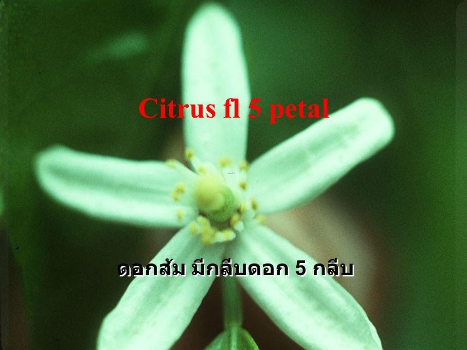 Chokun LP W