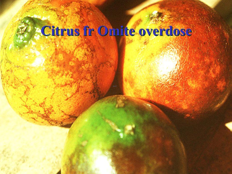 Citrus Flowers ดอกส้ม