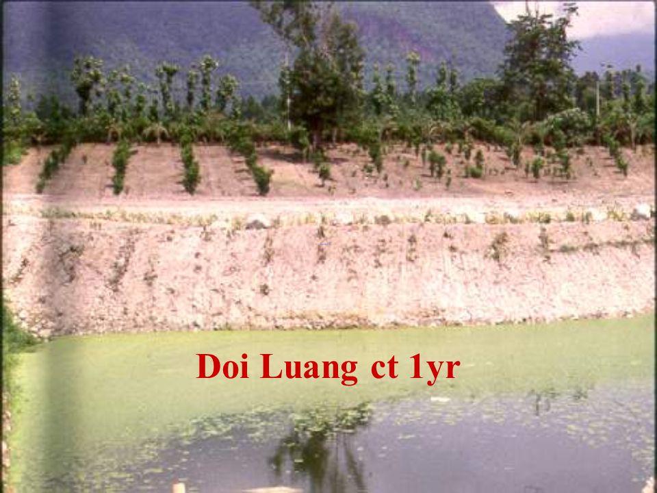 Doi Luang ct 1y