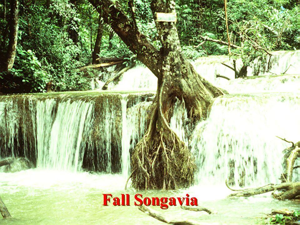 Fall Soi Dao NKS