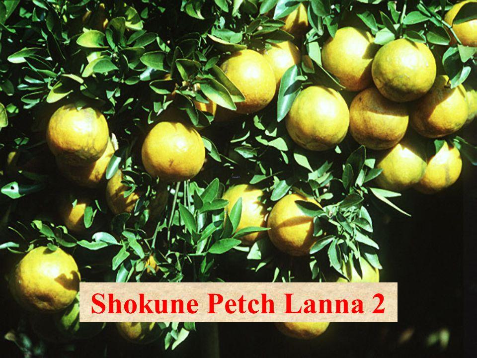 Shokun W