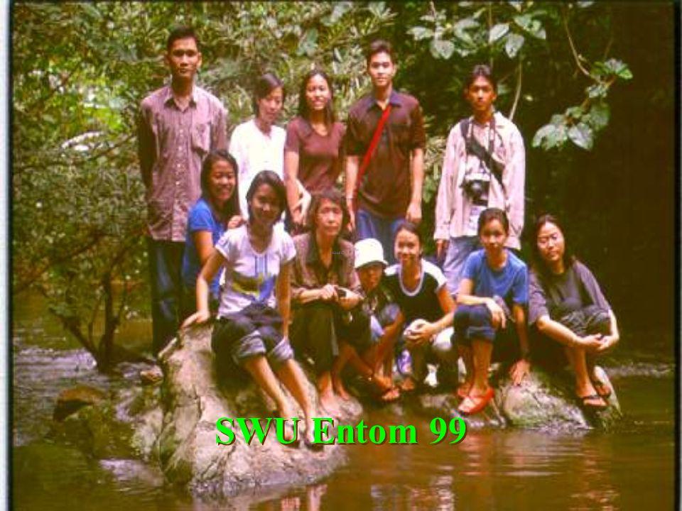 Suan Mai Ded