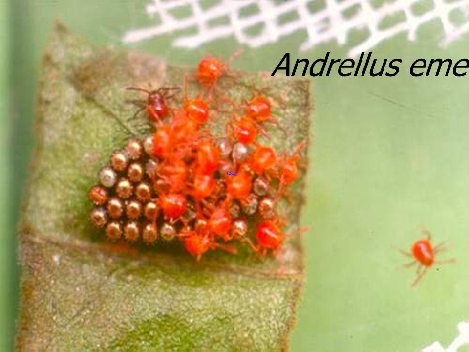 Andrellus 7EM