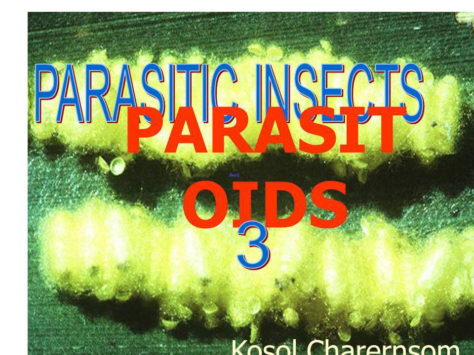Xanthopimpla pupa in host larva Doi Intanon