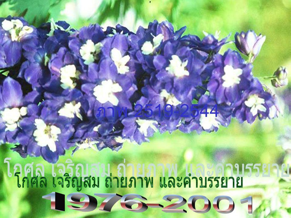 1976 Doi Ang Kha ng Kosol Charernsom Dept. Entomology, Faculty of Agriculture Kasetsart University, Bangkok, Thailand Phone (066) 034 281 265. Fax 034