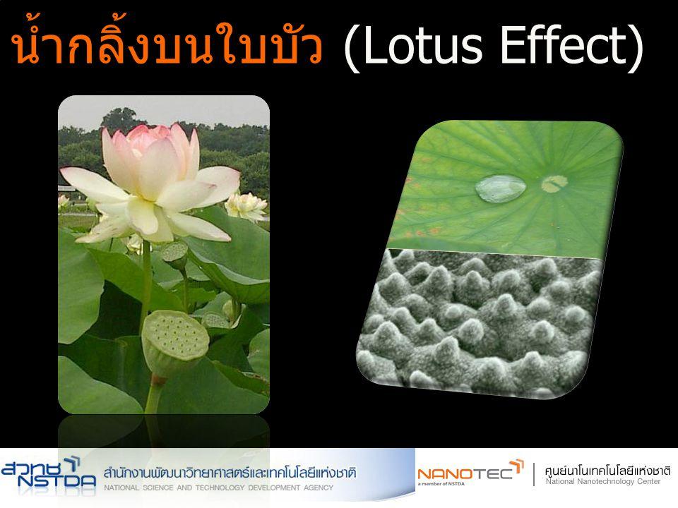 น้ำกลิ้งบนใบบัว (Lotus Effect)