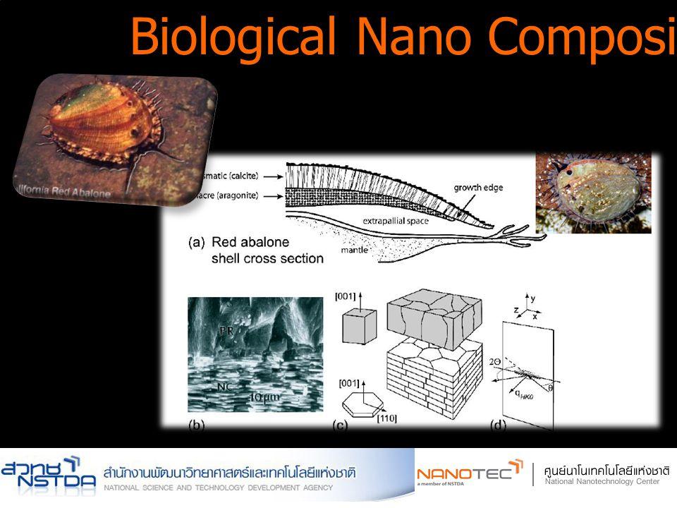 Biological Nano Composite