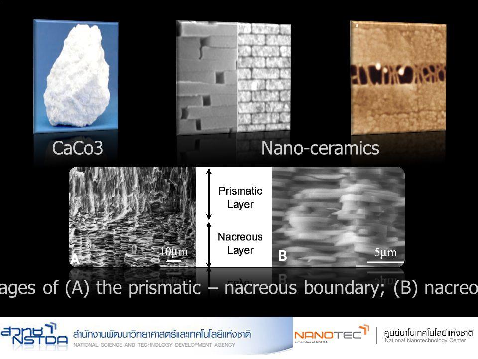 CaCo3Nano-ceramics SEM images of (A) the prismatic – nacreous boundary; (B) nacreous layer