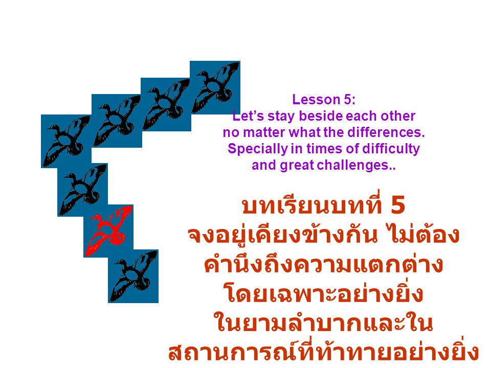 """or he is able to fly again. They reach their bevy or they just make another """"V"""" formation. หรือจนกว่าเจ้าห่านจะแข็งแรง พวกมันก็จะบินกลับเข้าฝูงเดิม หร"""