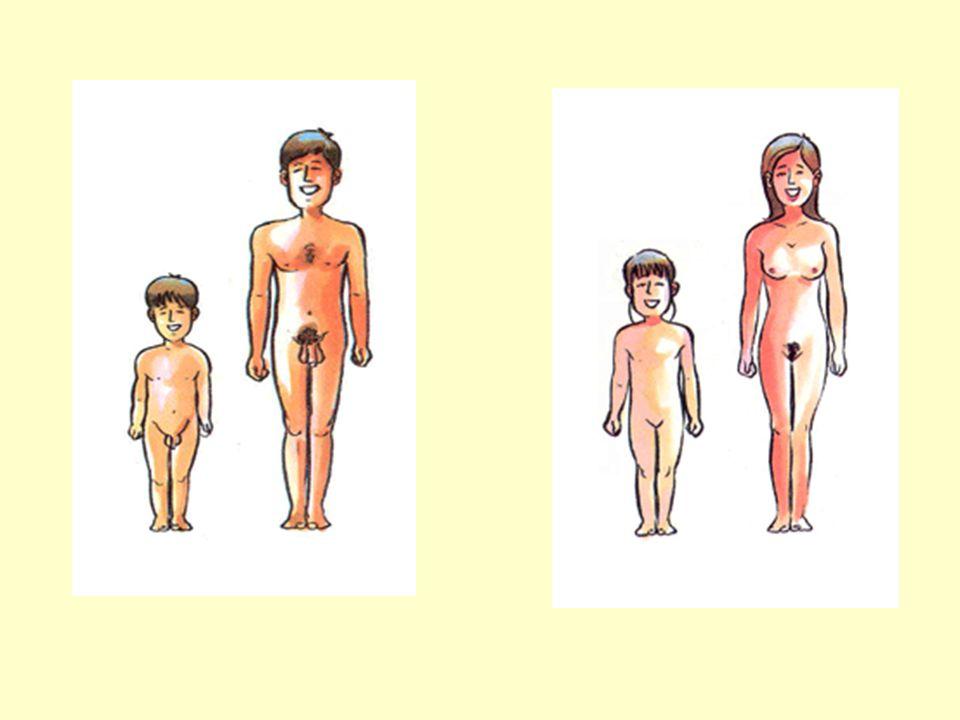 เพศสัมพันธ์ก่อน วัยอันควร ปัญหาที่ตามมา 1.ท้องไม่พร้อม ทำแท้ง สุขภาพจิต 2.