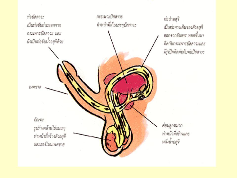 ถุงยางอนามัย นิยมผิวเรียบ สามารถป้องกันการตั้งครรภ์ ได้ 90-95 % ป้องกันโรคเอดส์ และ โรคติดต่อทางเพศสัมพันธ์