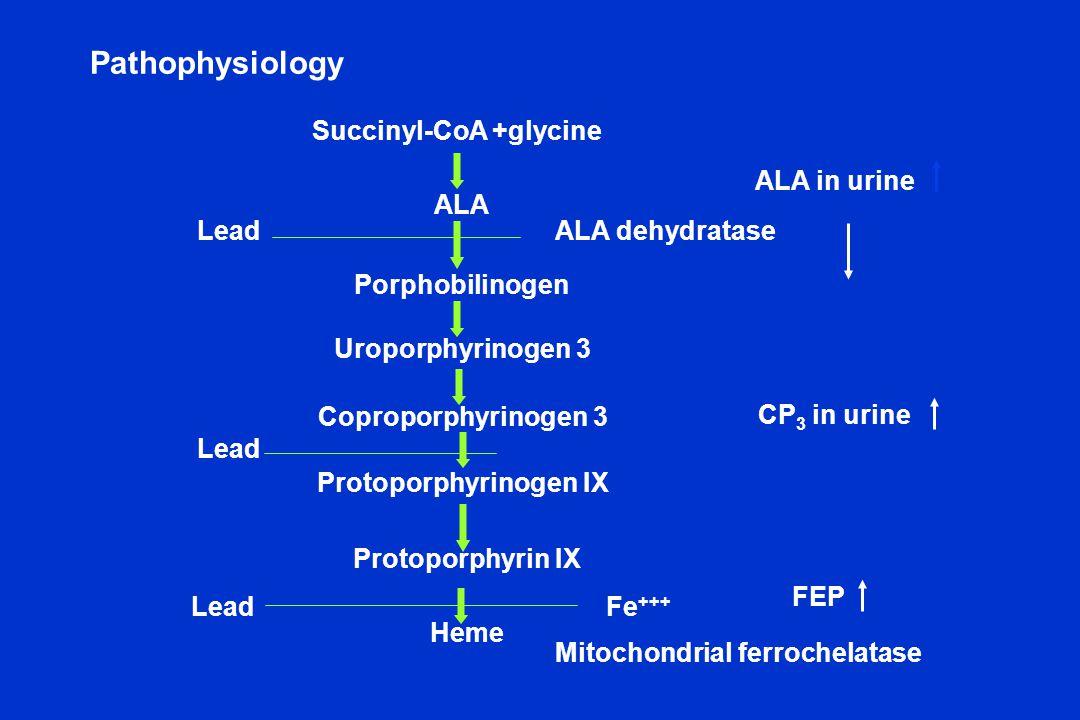 Pathophysiology Succinyl-CoA +glycine ALA Porphobilinogen ALA dehydrataseLead Uroporphyrinogen 3 Coproporphyrinogen 3 Protoporphyrinogen IX Protoporph
