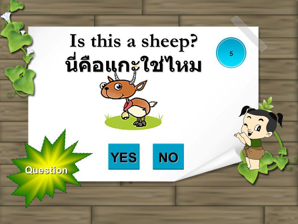 Question Is this a sheep? นี่คือแกะใช่ไหม YESNO 5