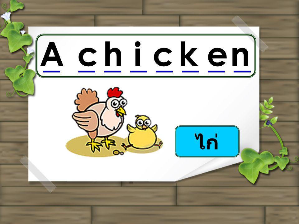 ไก่ _ _ _ _ Achicken