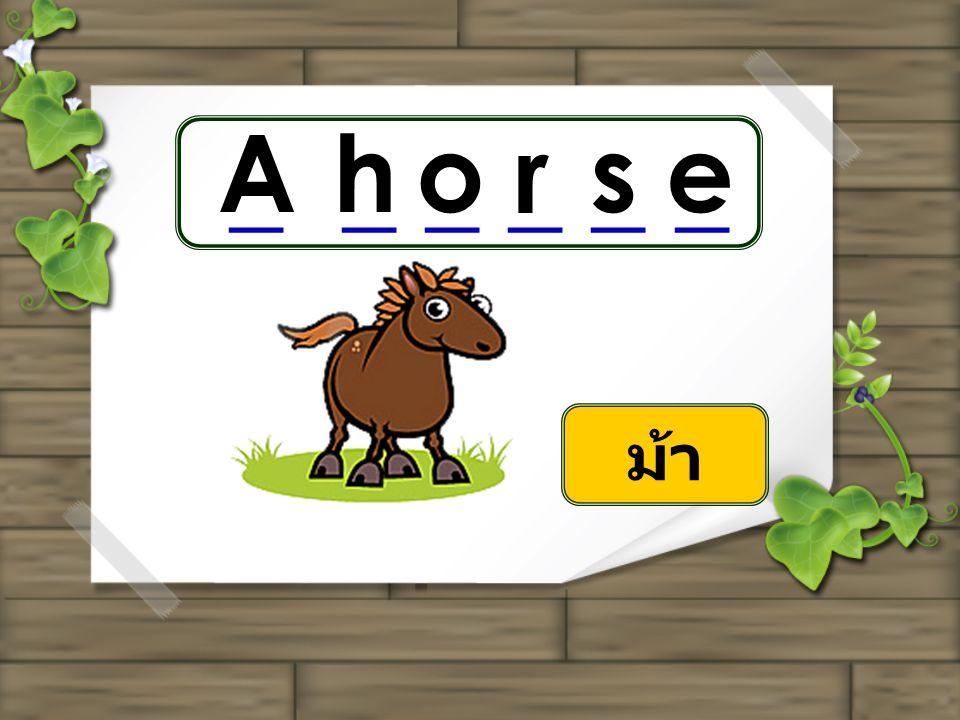 Ahorse _ _ _ ม้า