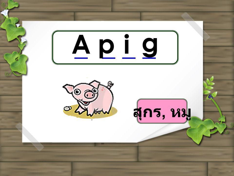 _ _ A p i g สุกร, หมู