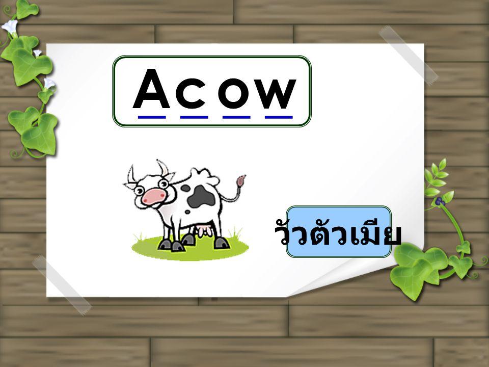 _ _ _ _ วัวตัวเมีย Acow