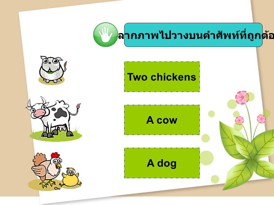 จงลากภาพไปวางบนคำศัพท์ที่ถูกต้อง Two chickens A cow A dog