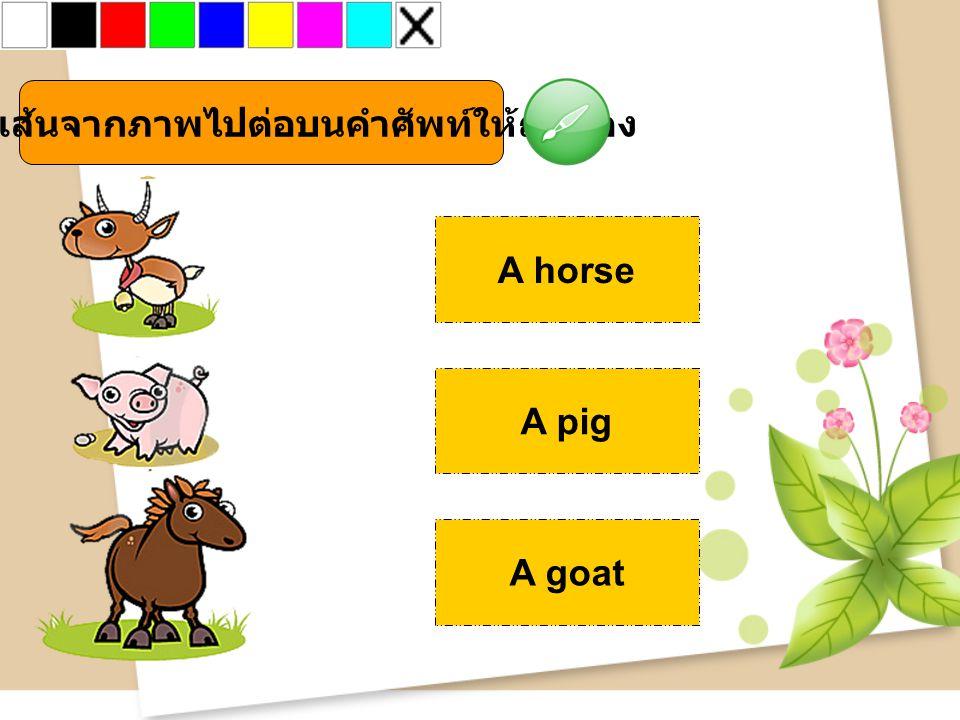 จงลากเส้นจากภาพไปต่อบนคำศัพท์ให้ถูกต้อง A horse A pig A goat