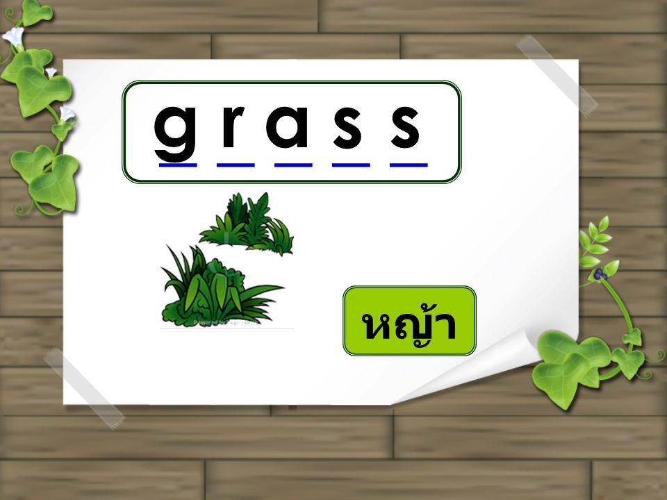 grass _ _ _ _ _ หญ้า
