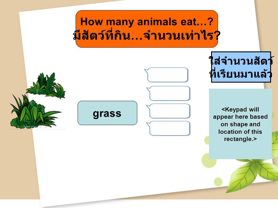 grass ใส่จำนวนสัตว์ ที่เรียนมาแล้ว How many animals eat…? มีสัตว์ที่กิน … จำนวนเท่าไร ?