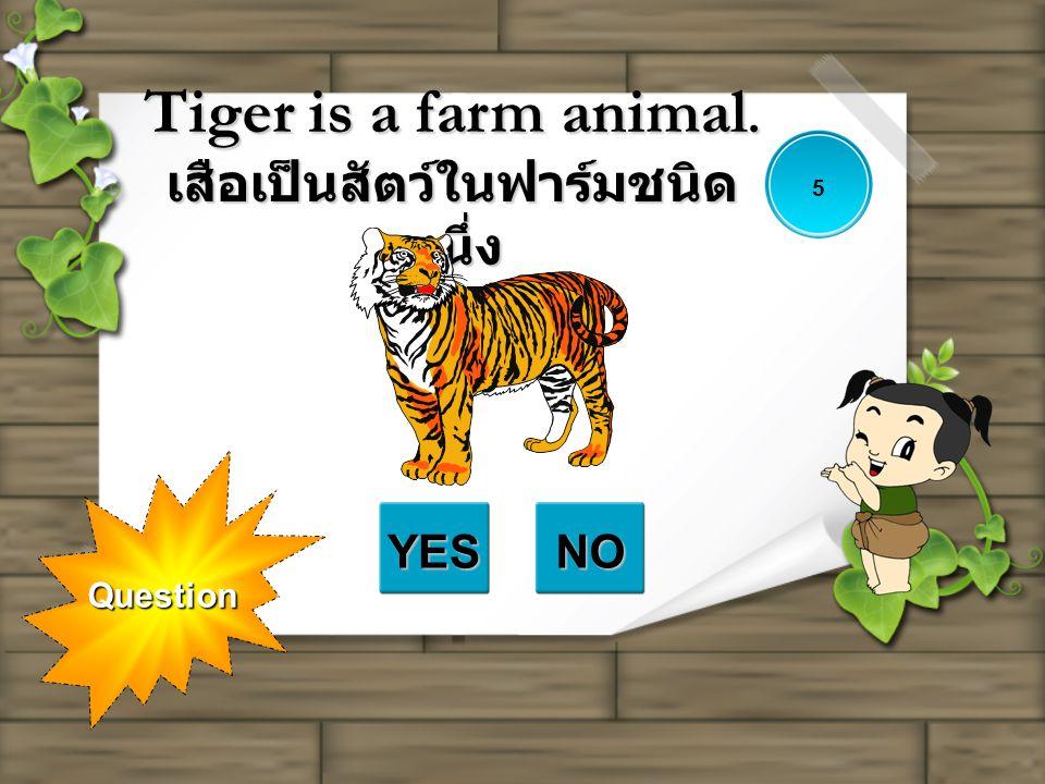 Question Tiger is a farm animal. เสือเป็นสัตว์ในฟาร์มชนิด หนึ่ง YESNO 5