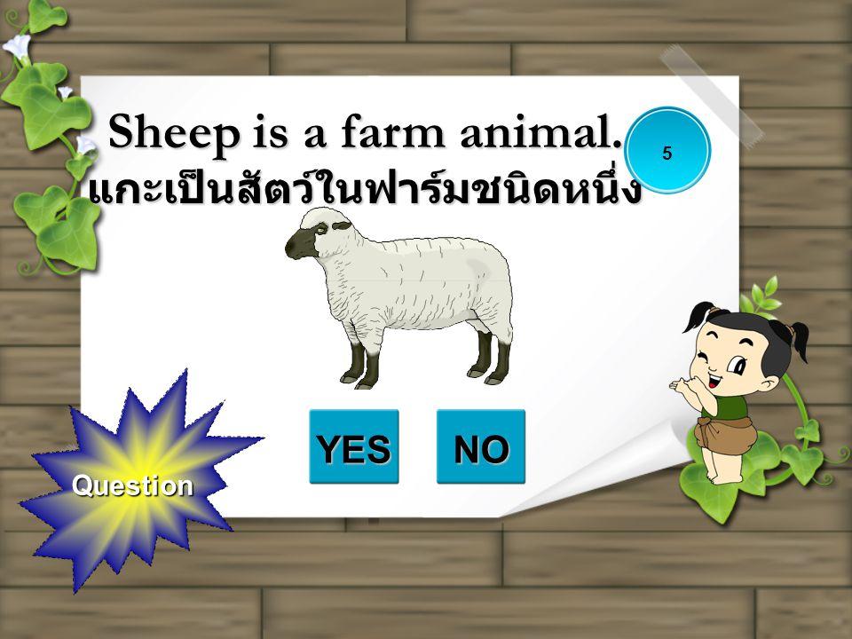 Question Sheep is a farm animal. แกะเป็นสัตว์ในฟาร์มชนิดหนึ่ง YESNO 5