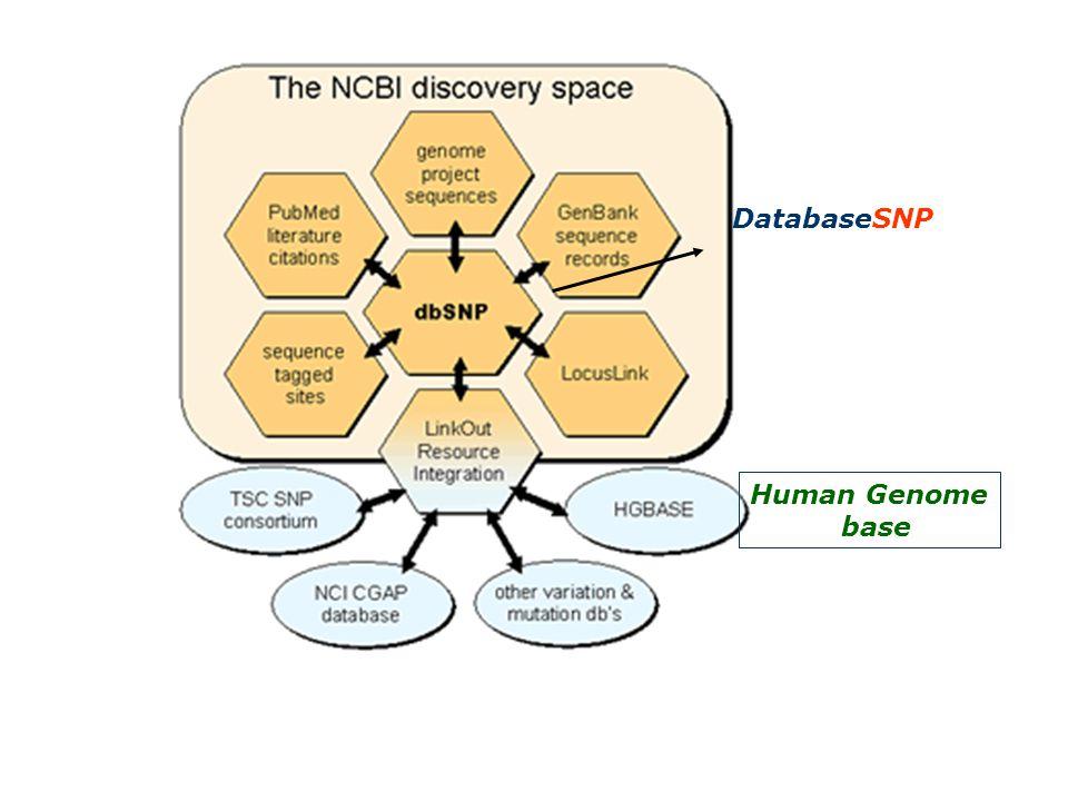 Human Genome base DatabaseSNP
