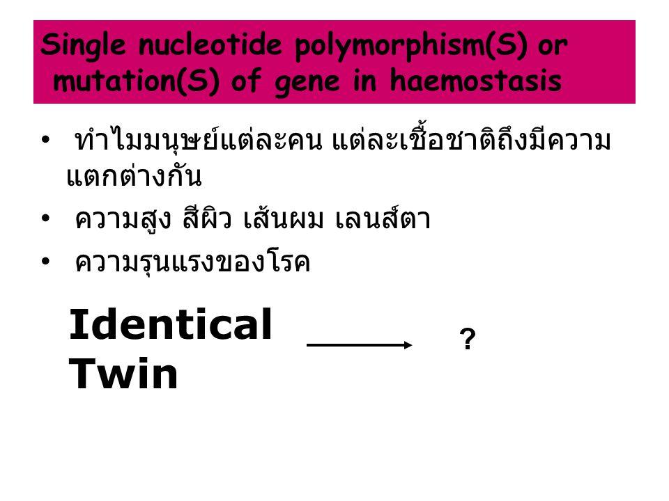 ทำไมมนุษย์แต่ละคน แต่ละเชื้อชาติถึงมีความ แตกต่างกัน ความสูง สีผิว เส้นผม เลนส์ตา ความรุนแรงของโรค Identical Twin Single nucleotide polymorphism(S) or