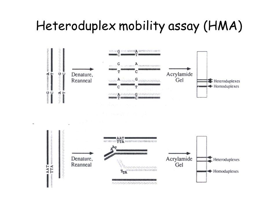 Heteroduplex mobility assay (HMA)