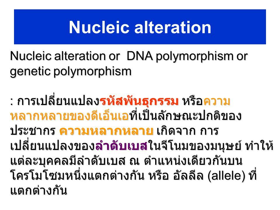 Nucleic alteration or DNA polymorphism or genetic polymorphism : การเปลี่ยนแปลงรหัสพันธุกรรม หรือความ หลากหลายของดีเอ็นเอที่เป็นลักษณะปกติของ ประชากร