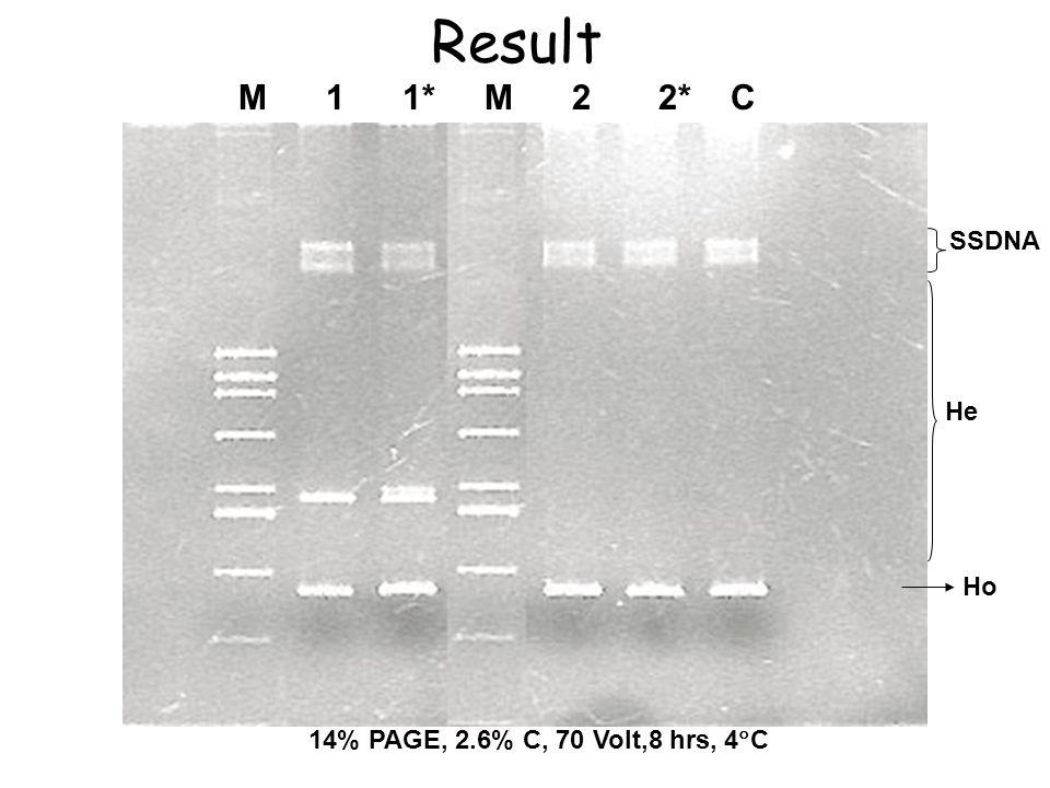 Ho He SSDNA M 1 1* M 2 2* C 14% PAGE, 2.6% C, 70 Volt,8 hrs, 4  C